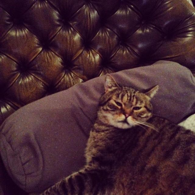 En mode tranquille sur son canapé Chesterfield ?