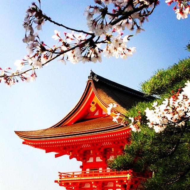 Mon rêve ? #japan #travel (Photo épinglée sur pinterest)
