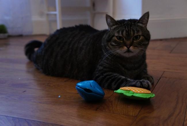avis-kitty-box-chat-fevrier