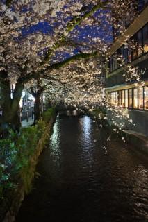 Kyoto et ses sakura